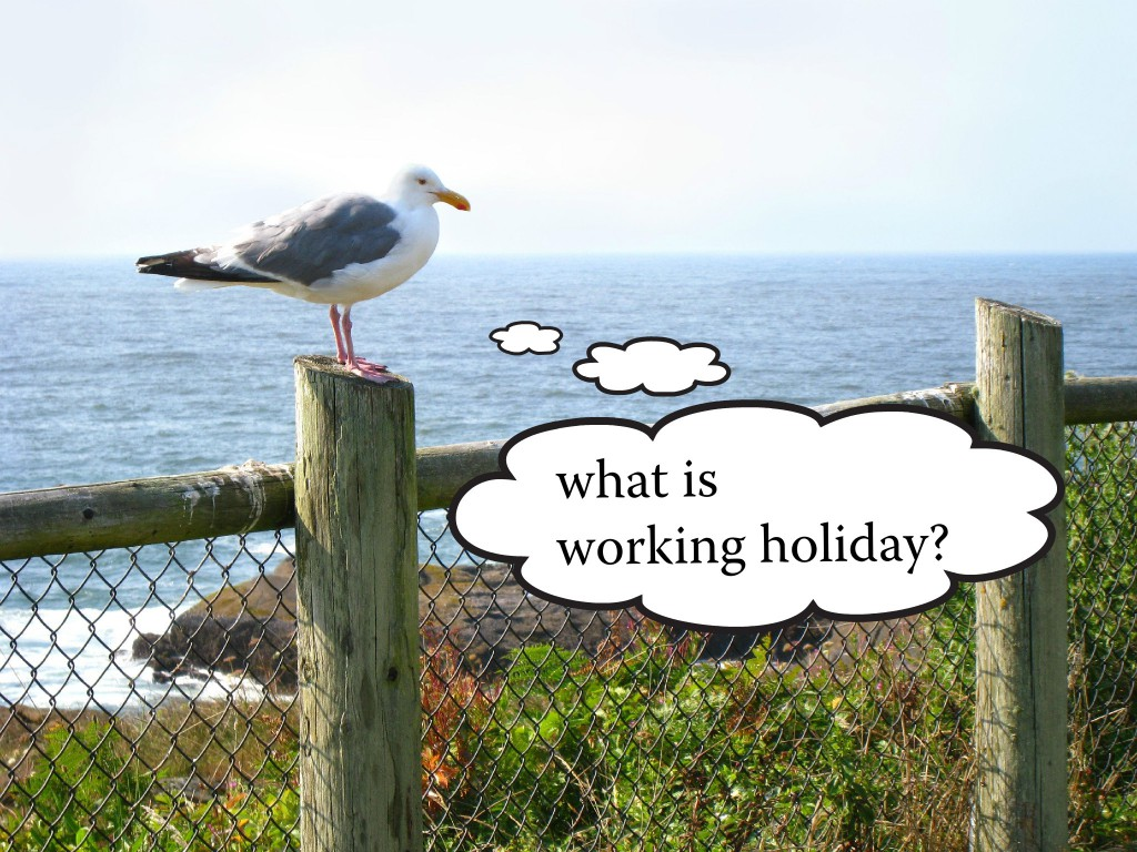what is working holiday