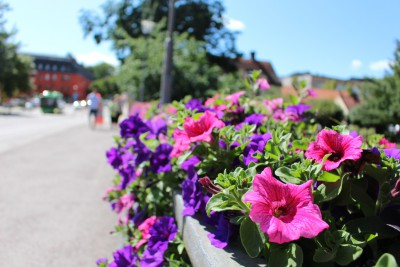 ウプサラのお花