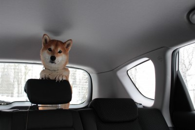 Midoriちゃんの犬、タロウ